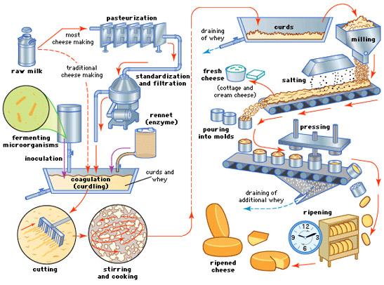 مرلحل تولید پنیر