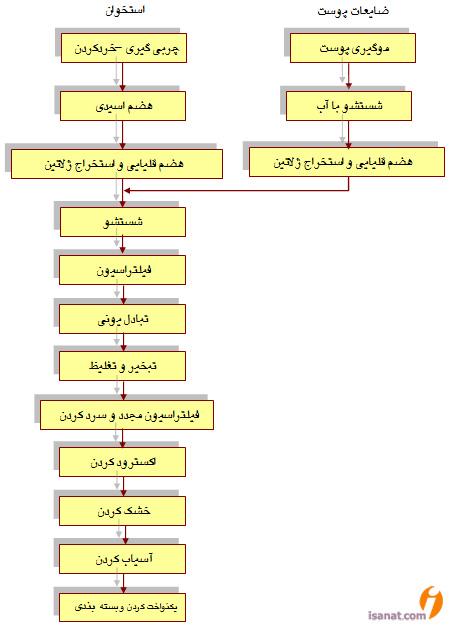روش تولید ژلاتین