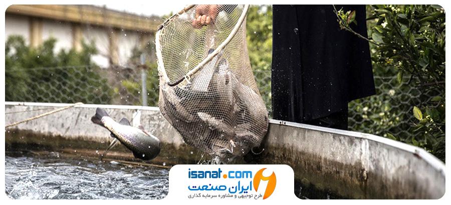 طرح توجیهی پرورش ماهی قزل آلا (مدار بسته)
