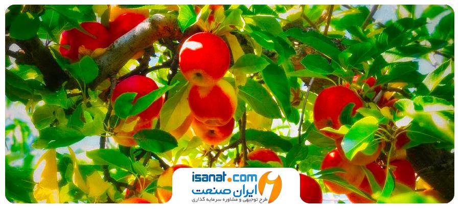 طرح توجیهی احداث باغ میوه