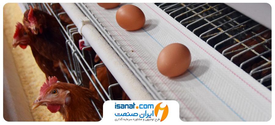 طرح توجیهی پرورش مرغ تخم گذار