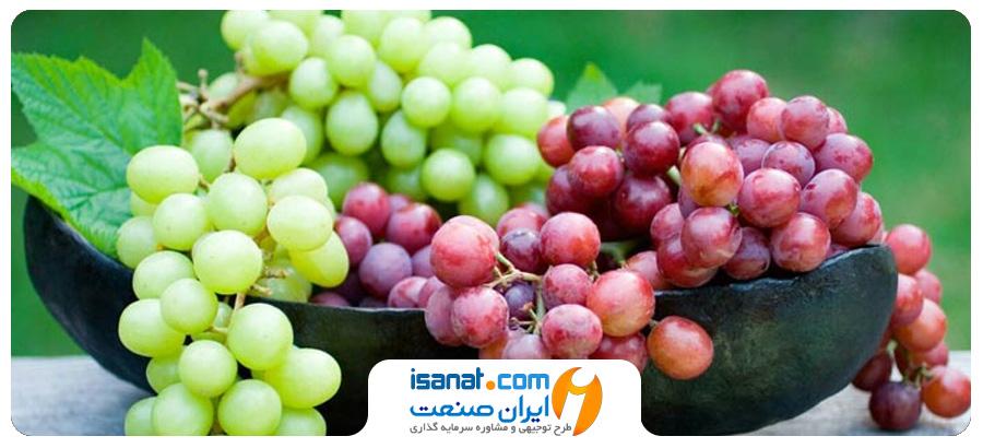 طرح توجیهی تولید مشتقات انگور