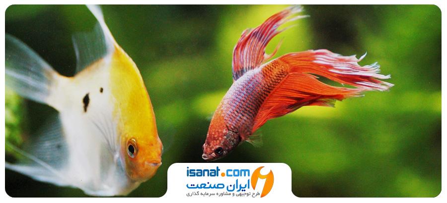 طرح توجیهی پرورش ماهی زینتی