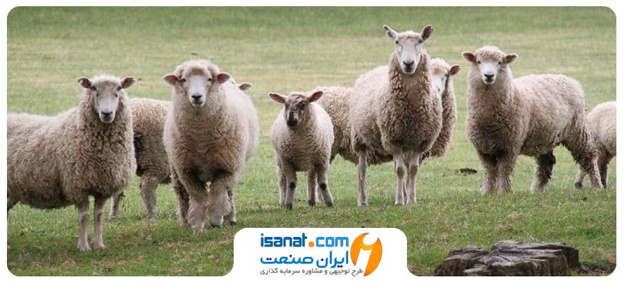 طرح توجیهی پرورش گوسفند